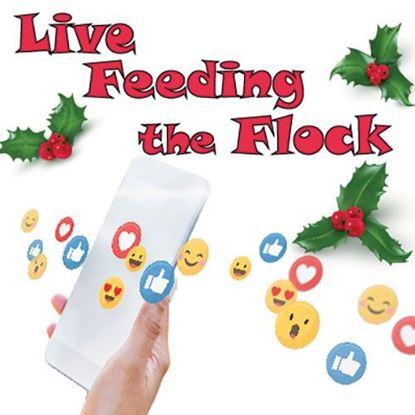 live-feeding-the-flock